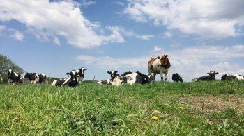Sharing Dairy's Sustainability Story